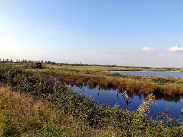 RSPB West Canvey Marshes